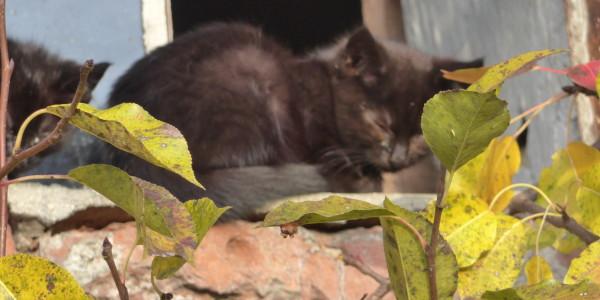 Ein junges Kätzchen chillt hinterm Birnbaum.